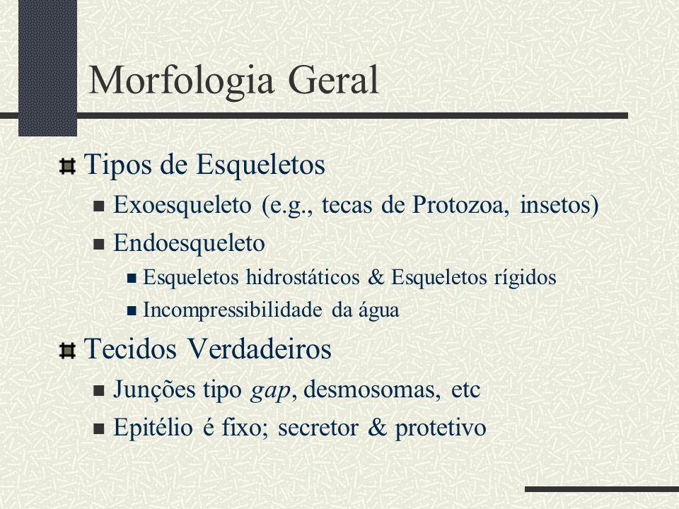 Morfologia Geral Tipos de Esqueletos Exoesqueleto (e.g., tecas de Protozoa, insetos) Endoesqueleto Esqueletos hidrostáticos & Esqueletos rígidos Incom