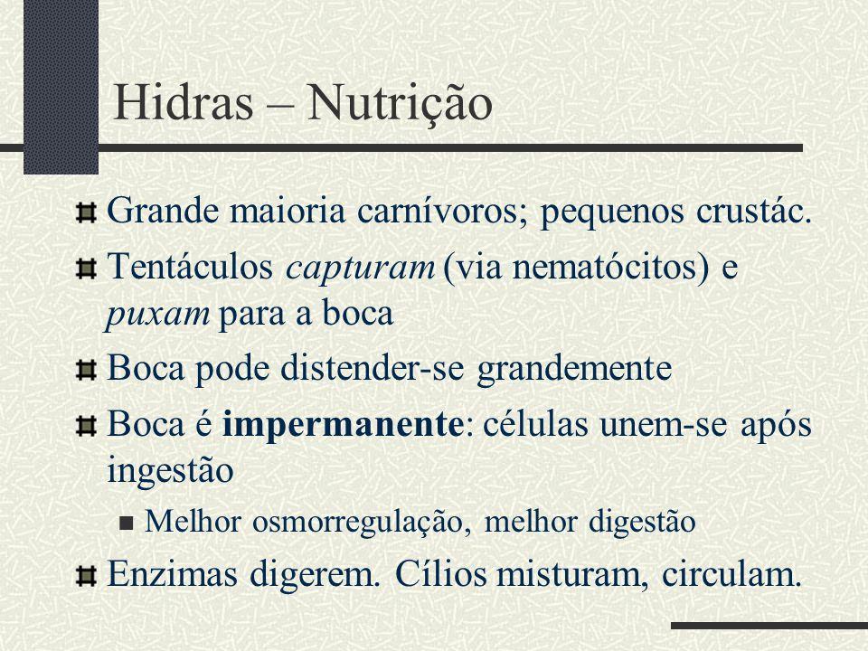 Hidras – Nutrição Grande maioria carnívoros; pequenos crustác. Tentáculos capturam (via nematócitos) e puxam para a boca Boca pode distender-se grande