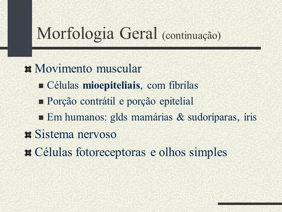 Morfologia Geral (continuação) Movimento muscular Células mioepiteliais, com fibrilas Porção contrátil e porção epitelial Em humanos: glds mamárias &