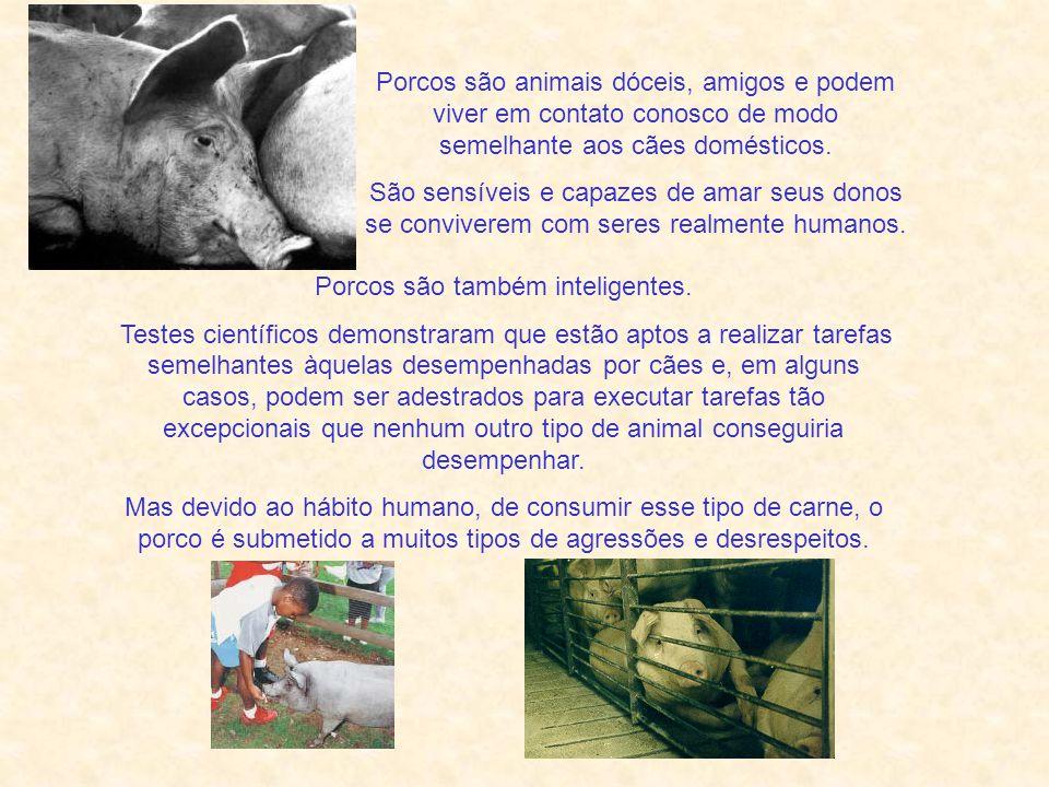 Nem tão Porcos como Nós Rildo Silveira Created by rildosilveira@yahoo.com.br Cruzília – MG – Brasil Gandhi Sinto que o progresso espiritual requer, em uma determinada etapa, que paremos de matar nossos companheiros, os animais, para a satisfação de nossos desejos corpóreos .
