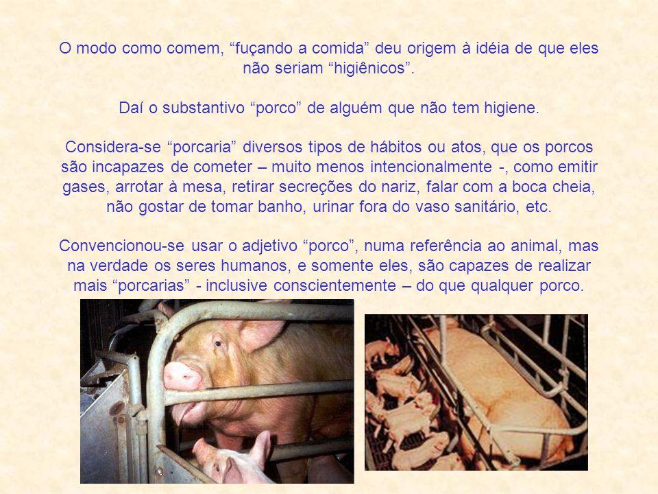 O modo como comem, fuçando a comida deu origem à idéia de que eles não seriam higiênicos .