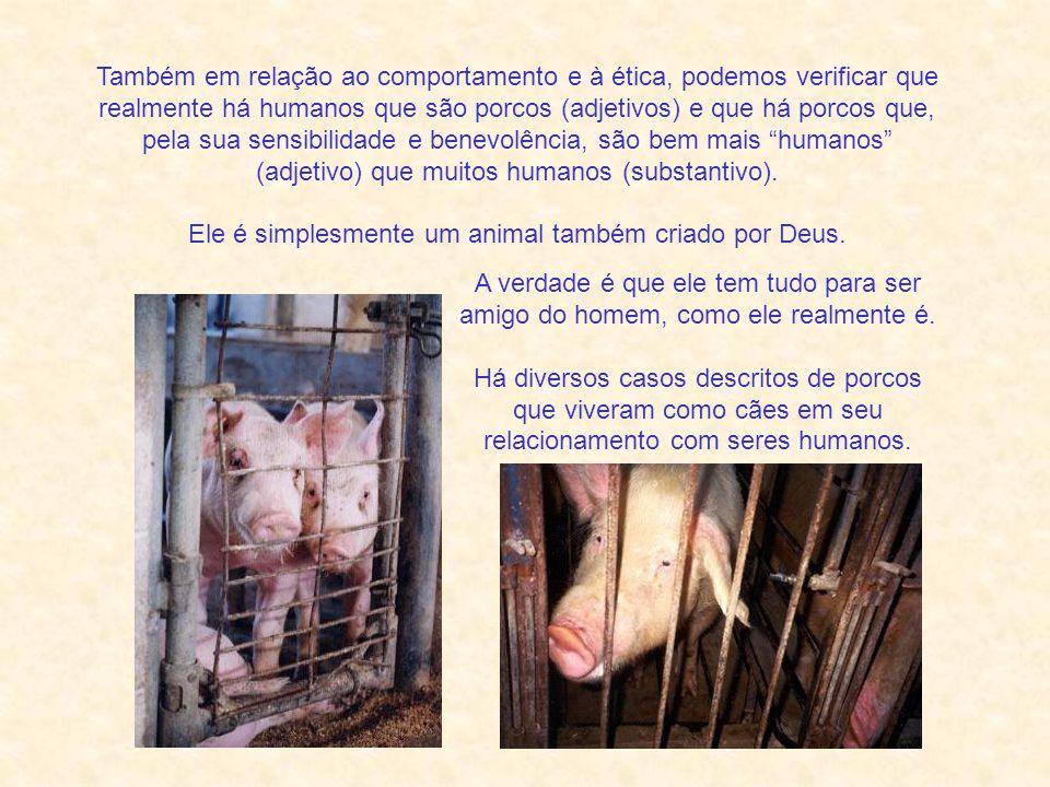 Considerando-se que os porcos domésticos acabam em lixões ou comendo lavagem em coxos, não por culpa deles, e que humanos comem de fato verdadeiras porcarias .