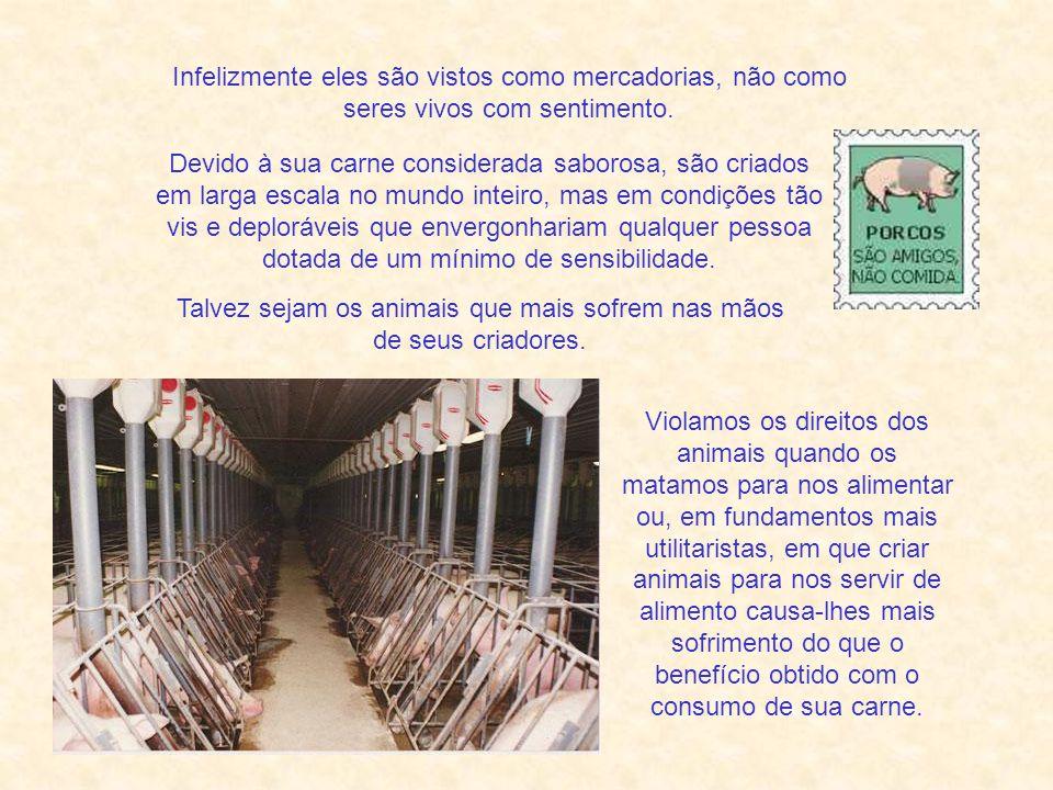 Também em relação ao comportamento e à ética, podemos verificar que realmente há humanos que são porcos (adjetivos) e que há porcos que, pela sua sensibilidade e benevolência, são bem mais humanos (adjetivo) que muitos humanos (substantivo).
