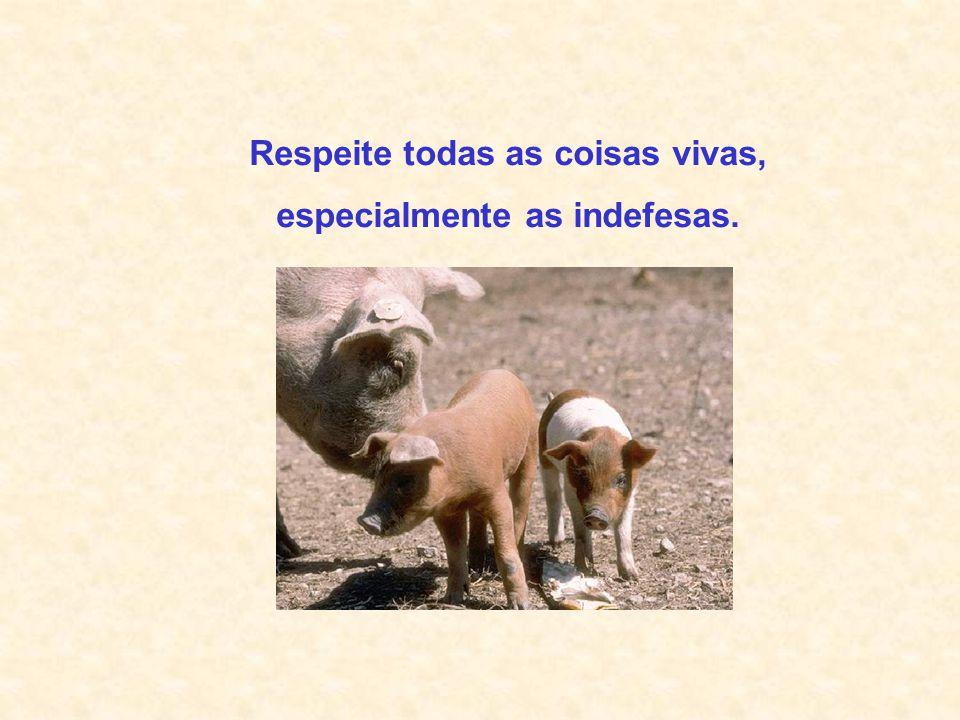 Respeite todas as coisas vivas, especialmente as indefesas.