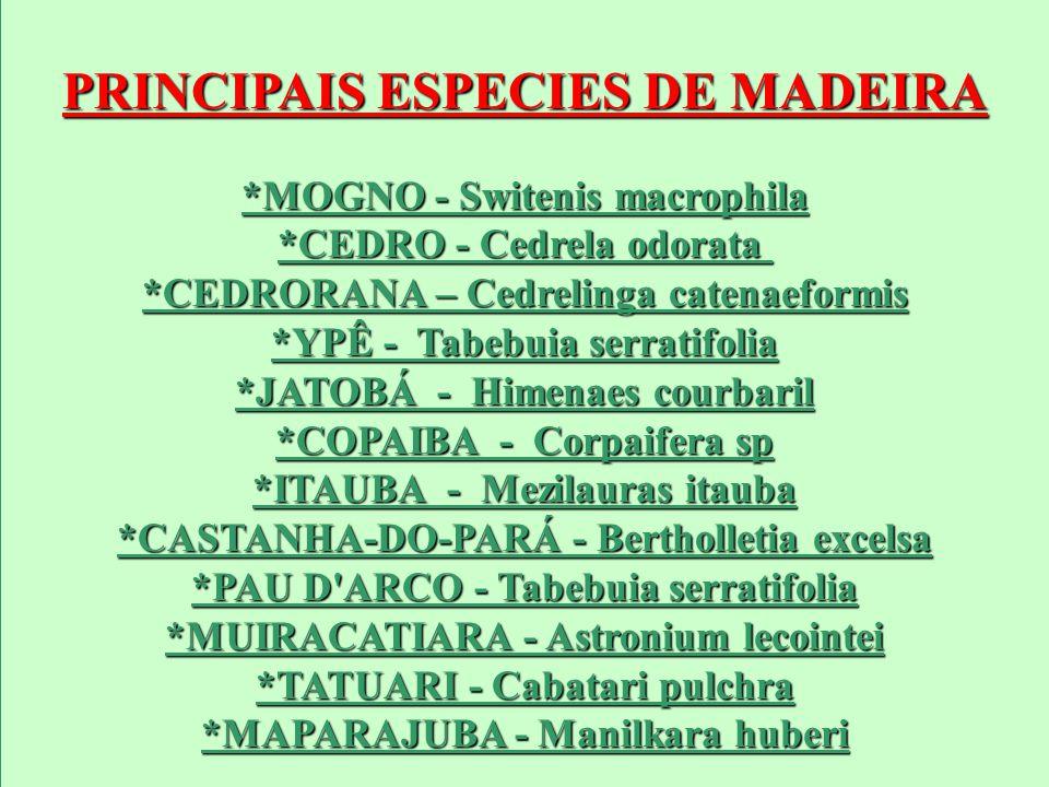 PRINCIPAIS ESPECIES DE MADEIRA *MOGNO - Switenis macrophila *CEDRO - Cedrela odorata *MOGNO - Switenis macrophila *CEDRO - Cedrela odorata *CEDRORANA