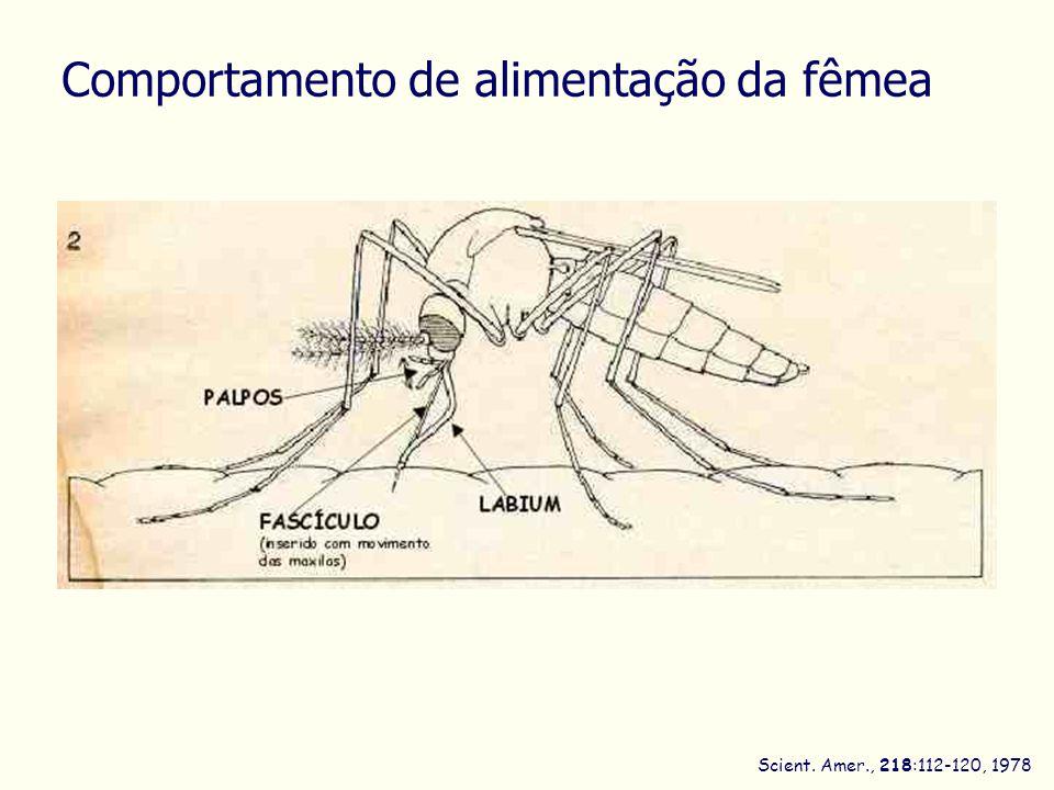 Scient. Amer., 218:112-120, 1978 Comportamento de alimentação da fêmea