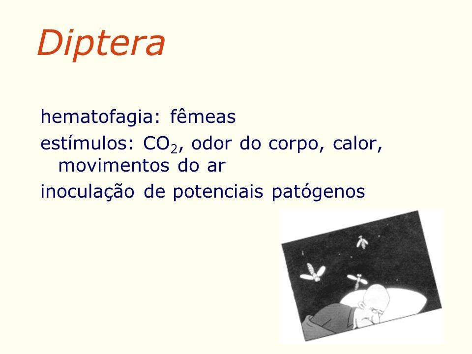 hematofagia: fêmeas estímulos: CO 2, odor do corpo, calor, movimentos do ar inoculação de potenciais patógenos Diptera