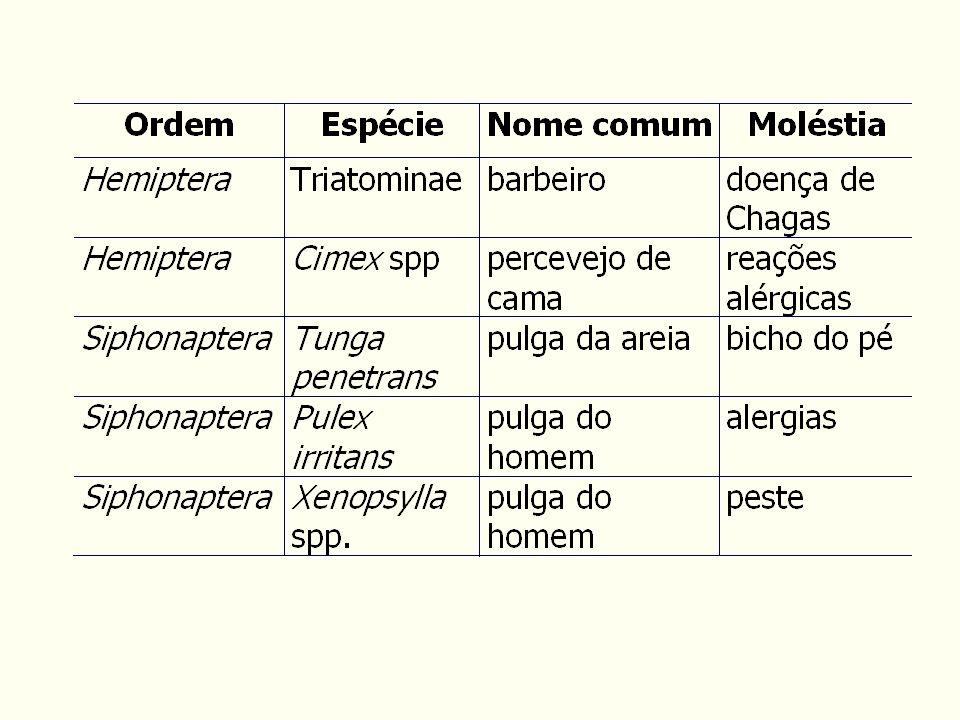 Artrópodes de importância médica - ácaros carrapatos Ixodidae e Argasidae dermatites e paralisia pelos componentes da secreção salivar transmissores de babésias, vírus, rickétsias e espiroquetídeos