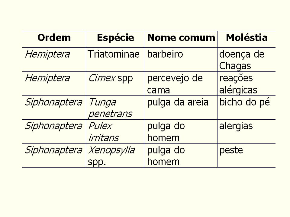 Psychodidae: flebotomíneos Simuliidae: borrachudos.