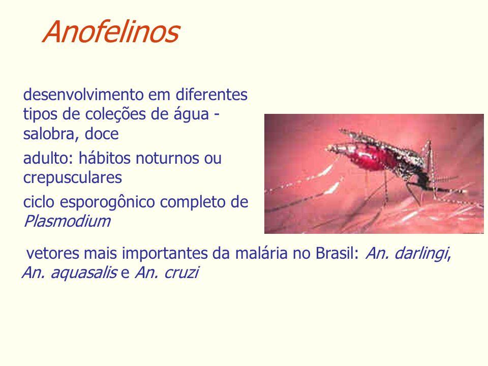 Anofelinos desenvolvimento em diferentes tipos de coleções de água - salobra, doce adulto: hábitos noturnos ou crepusculares ciclo esporogônico completo de Plasmodium vetores mais importantes da malária no Brasil: An.