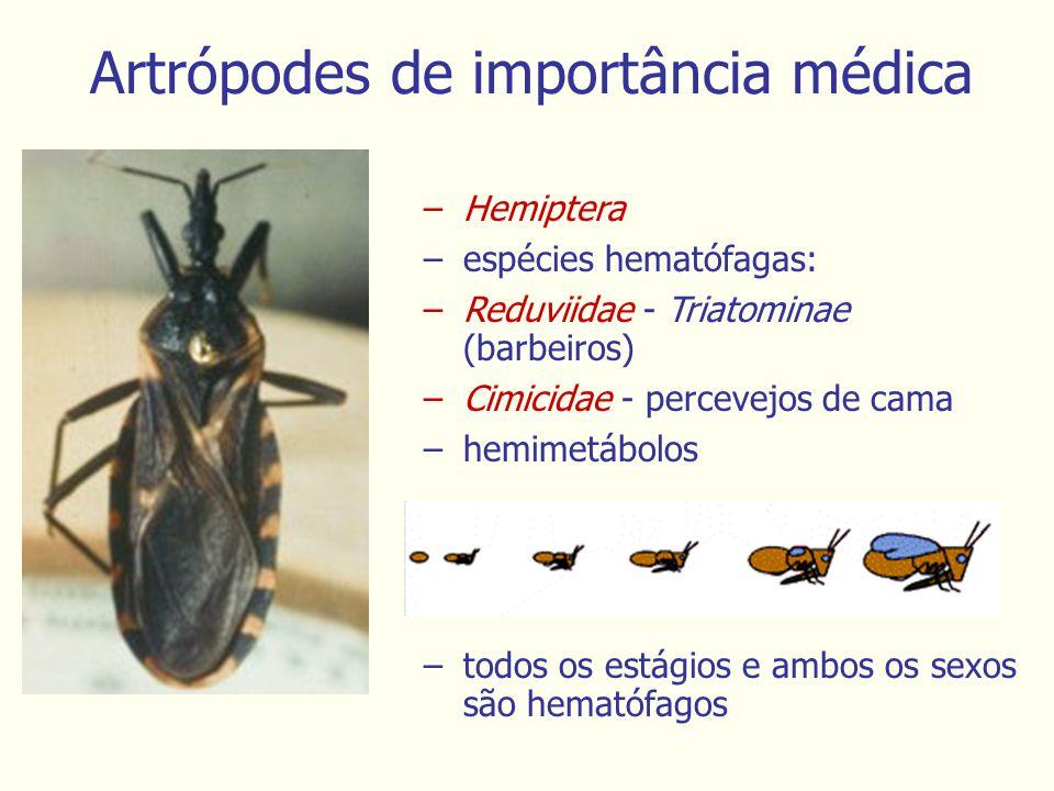 –Hemiptera –espécies hematófagas: –Reduviidae - Triatominae (barbeiros) –Cimicidae - percevejos de cama –hemimetábolos Artrópodes de importância médica –todos os estágios e ambos os sexos são hematófagos