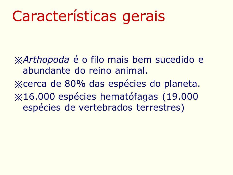 Características gerais ※ Arthopoda é o filo mais bem sucedido e abundante do reino animal.