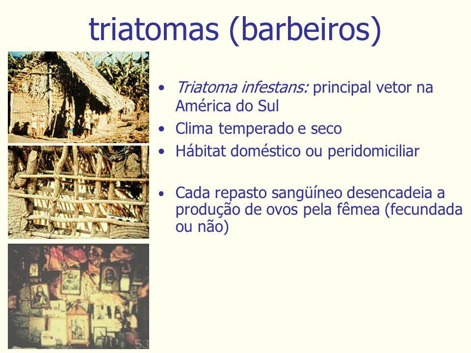 triatomas (barbeiros) Triatoma infestans: principal vetor na América do Sul Clima temperado e seco Hábitat doméstico ou peridomiciliar Cada repasto sangüíneo desencadeia a produção de ovos pela fêmea (fecundada ou não)