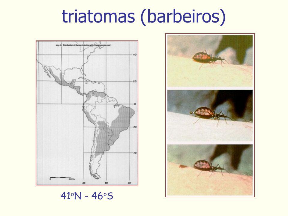 triatomas (barbeiros) 41 o N - 46 o S