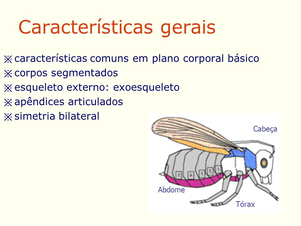 REMOÇÃO DE TECIDOS NECRÓTICOS –secreção de proteases –ingestão do tecido liquefeito ATIVIDADE ANTIMICROBIANA –Staphylococcus aureus, Streptococcus sp.