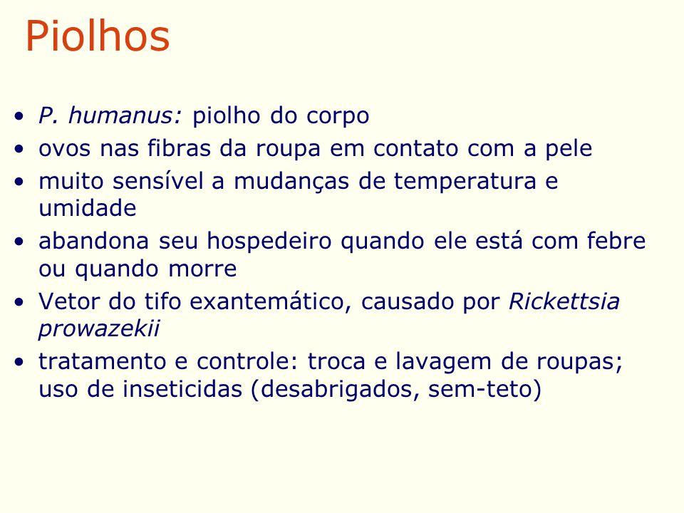 P. humanus: piolho do corpo ovos nas fibras da roupa em contato com a pele muito sensível a mudanças de temperatura e umidade abandona seu hospedeiro