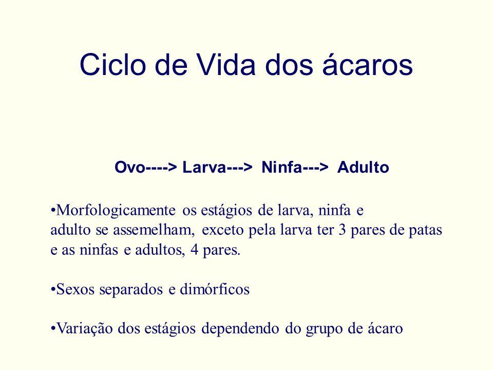 Ciclo de Vida dos ácaros Ovo----> Larva---> Ninfa---> Adulto Morfologicamente os estágios de larva, ninfa e adulto se assemelham, exceto pela larva ter 3 pares de patas e as ninfas e adultos, 4 pares.