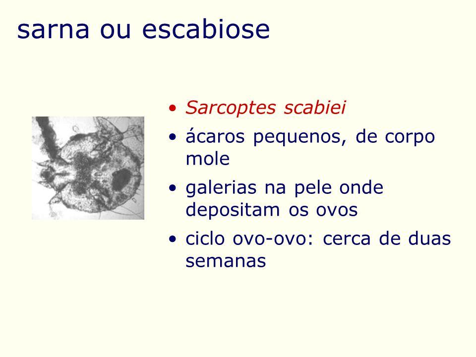 sarna ou escabiose Sarcoptes scabiei ácaros pequenos, de corpo mole galerias na pele onde depositam os ovos ciclo ovo-ovo: cerca de duas semanas