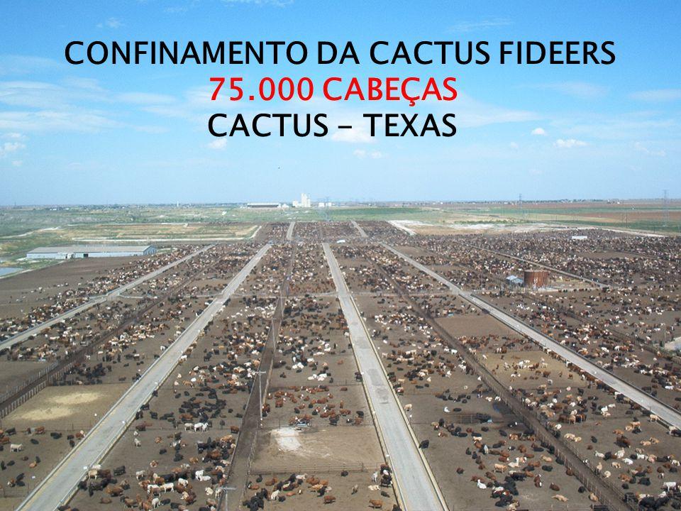 CONFINAMENTO DA CACTUS FIDEERS 75.000 CABEÇAS CACTUS - TEXAS