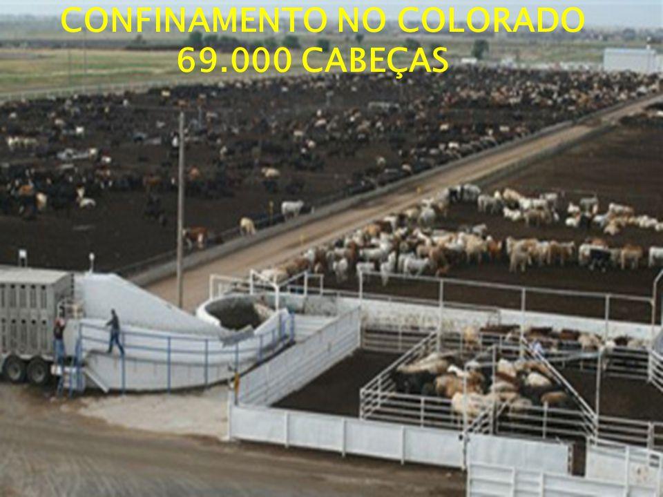 CONFINAMENTO NO COLORADO 69.000 CABEÇAS