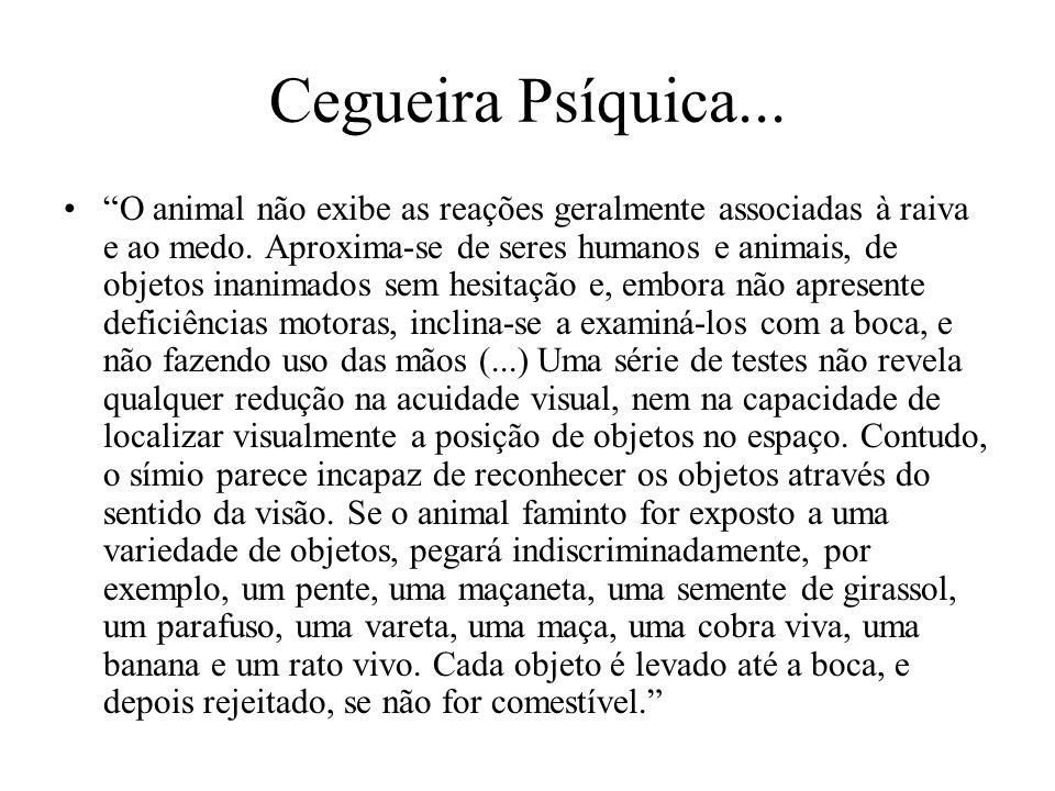 """Cegueira Psíquica... """"O animal não exibe as reações geralmente associadas à raiva e ao medo. Aproxima-se de seres humanos e animais, de objetos inanim"""