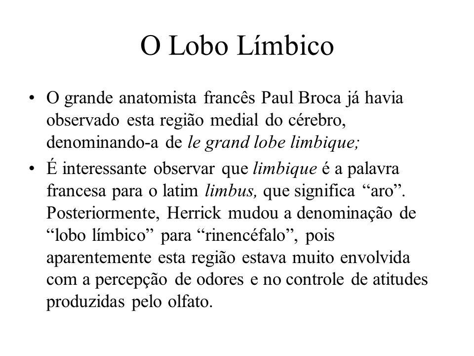 O Lobo Límbico O grande anatomista francês Paul Broca já havia observado esta região medial do cérebro, denominando-a de le grand lobe limbique; É int