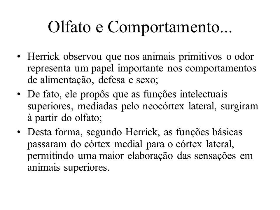 Olfato e Comportamento... Herrick observou que nos animais primitivos o odor representa um papel importante nos comportamentos de alimentação, defesa