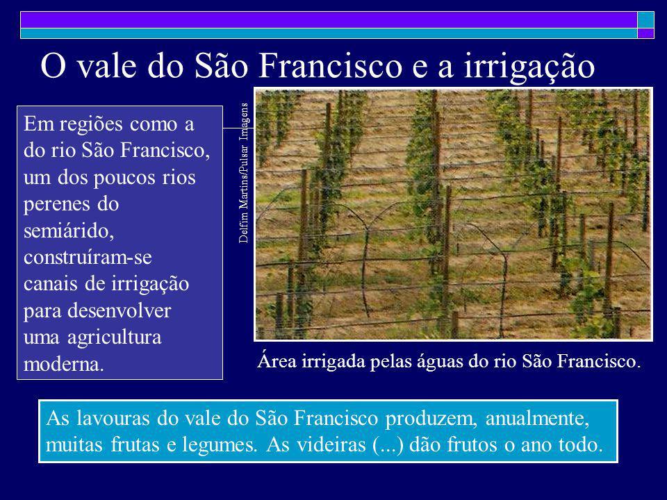 O vale do São Francisco e a irrigação Em regiões como a do rio São Francisco, um dos poucos rios perenes do semiárido, construíram-se canais de irriga
