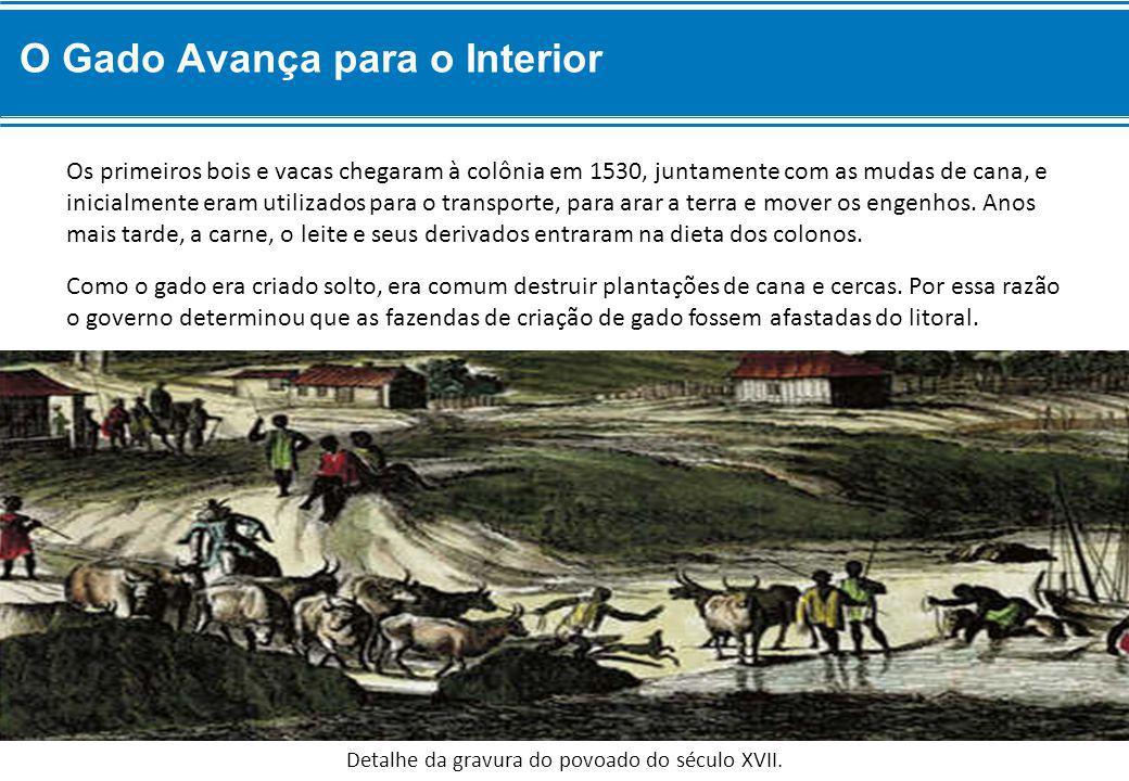 Como o gado era criado solto, era comum destruir plantações de cana e cercas.