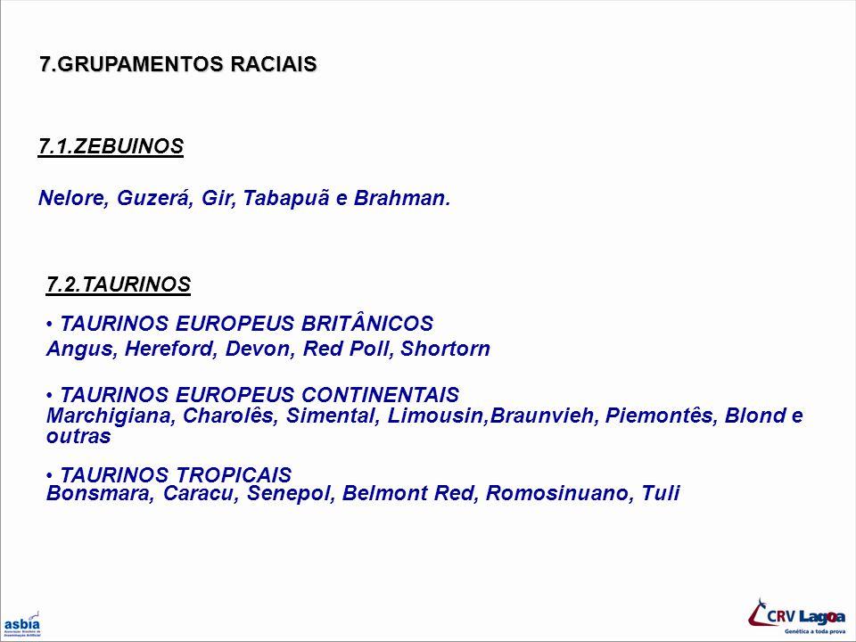 7.GRUPAMENTOS RACIAIS 7.1.ZEBUINOS Nelore, Guzerá, Gir, Tabapuã e Brahman. 7.2.TAURINOS TAURINOS EUROPEUS BRITÂNICOS Angus, Hereford, Devon, Red Poll,