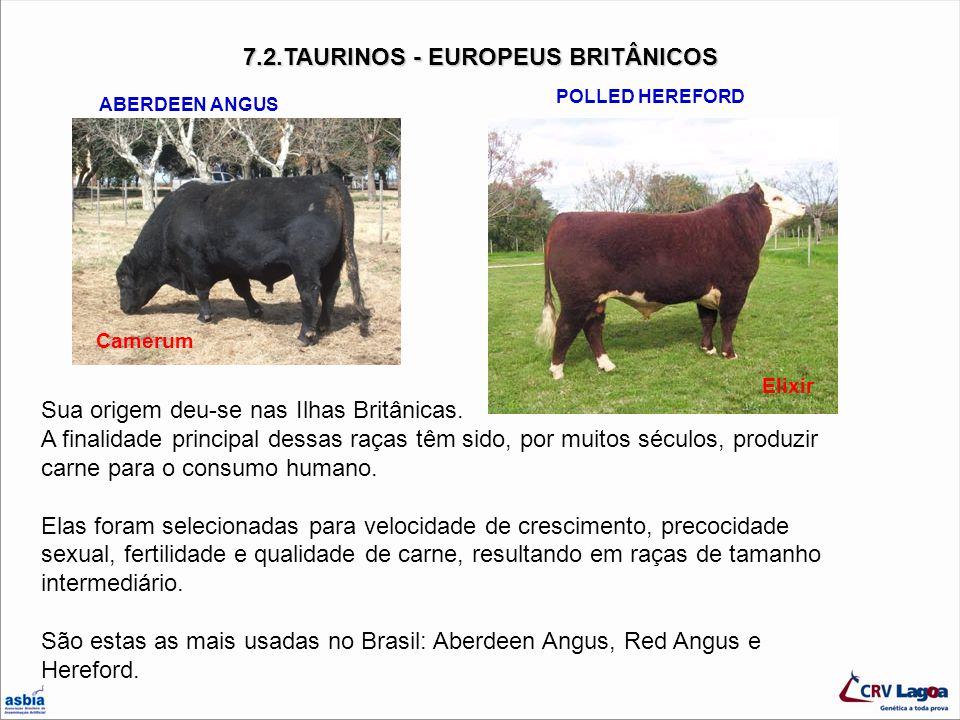 7.2.TAURINOS - EUROPEUS BRITÂNICOS Sua origem deu-se nas Ilhas Britânicas. A finalidade principal dessas raças têm sido, por muitos séculos, produzir