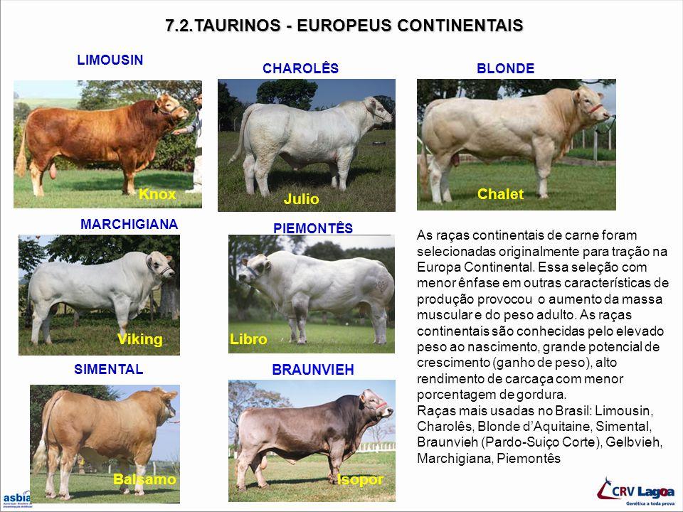 CHAROLÊS BLONDE MARCHIGIANA 7.2.TAURINOS - EUROPEUS CONTINENTAIS 7.2.TAURINOS - EUROPEUS CONTINENTAIS LIMOUSIN Isopor BRAUNVIEH PIEMONTÊS Libro SIMENT