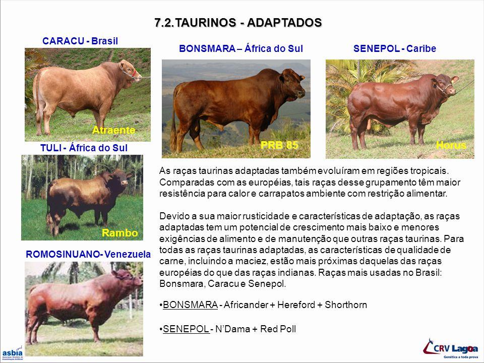 7.2.TAURINOS - ADAPTADOS TULI - África do Sul CARACU - Brasil BONSMARA – África do SulSENEPOL - Caribe As raças taurinas adaptadas também evoluíram em