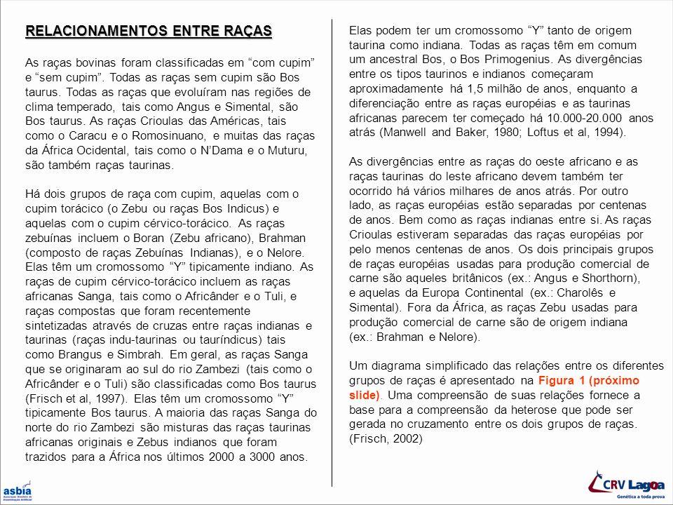 6.EVOLUÇÃO HISTÓRICA DE ALGUNS GRUPOS DE RAÇAS BOVINAS Zebu indiano (ex.