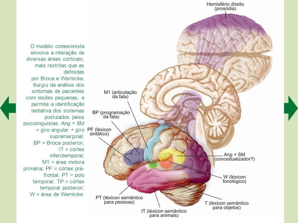 O modelo conexionista envolve a interação de diversas áreas corticais, mais restritas que as definidas por Broca e Wernicke.
