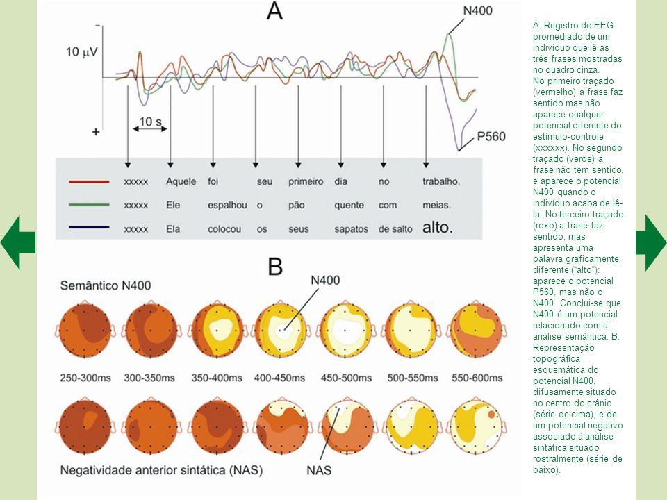 A.Registro do EEG promediado de um indivíduo que lê as três frases mostradas no quadro cinza.