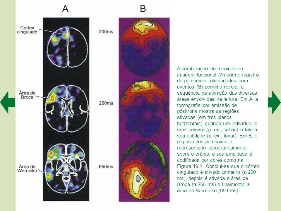 A combinação de técnicas de imagem funcional (A) com o registro de potenciais relacionados com eventos (B) permitiu revelar a sequência de ativação das diversas áreas envolvidas na leitura.