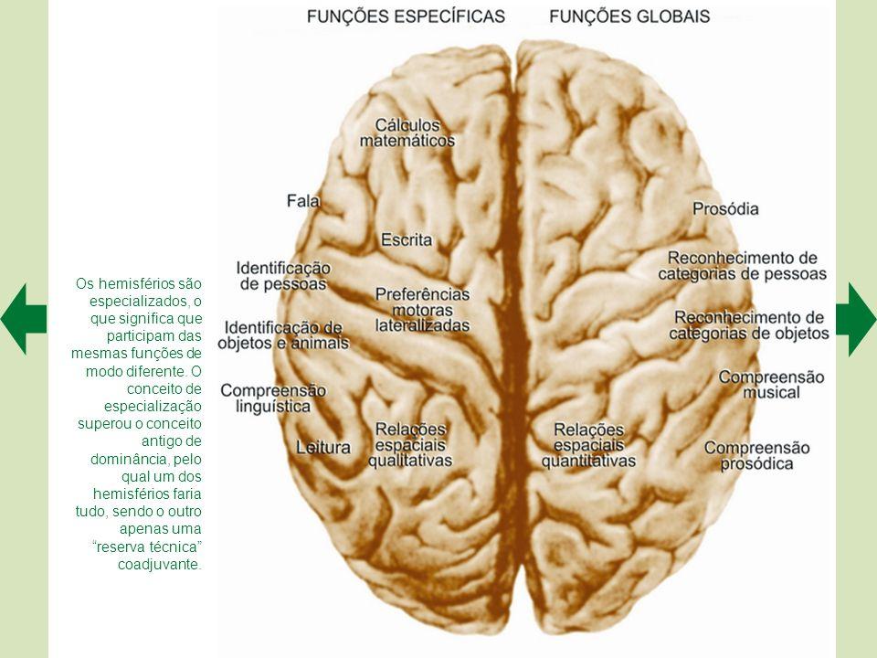 Os hemisférios são especializados, o que significa que participam das mesmas funções de modo diferente.
