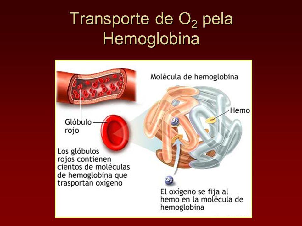 Transporte de O 2 pela Hemoglobina