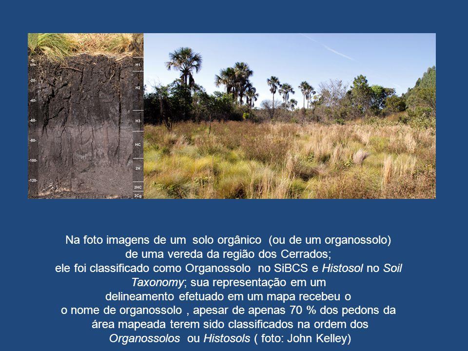 Na foto imagens de um solo orgânico (ou de um organossolo) de uma vereda da região dos Cerrados; ele foi classificado como Organossolo no SiBCS e Hist