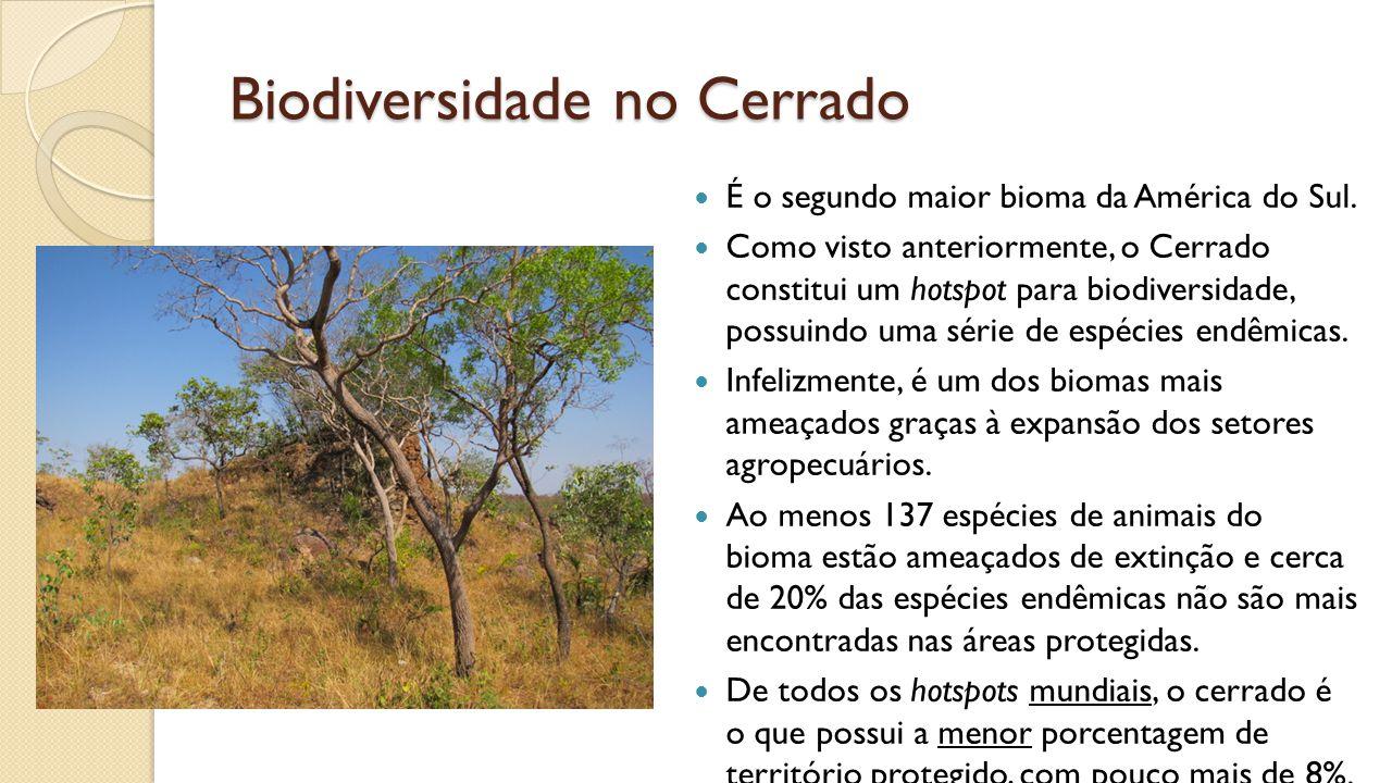 Biodiversidade no Cerrado É o segundo maior bioma da América do Sul.