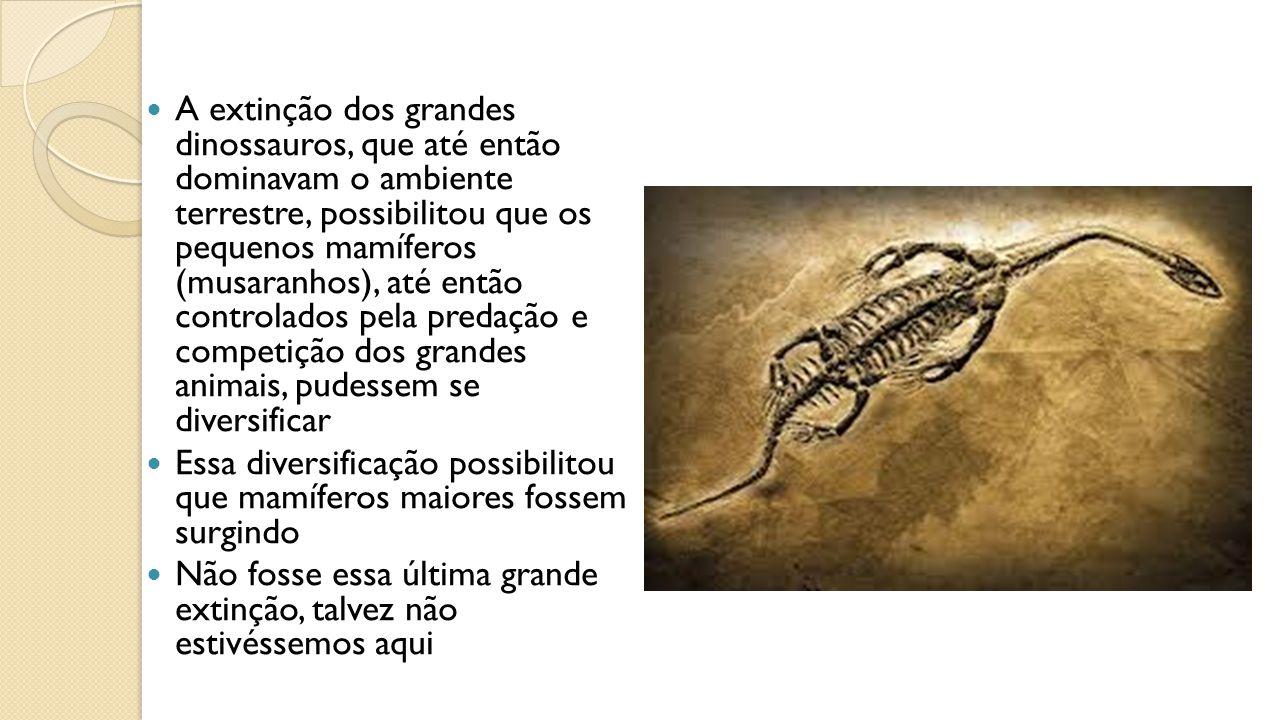 A extinção dos grandes dinossauros, que até então dominavam o ambiente terrestre, possibilitou que os pequenos mamíferos (musaranhos), até então controlados pela predação e competição dos grandes animais, pudessem se diversificar Essa diversificação possibilitou que mamíferos maiores fossem surgindo Não fosse essa última grande extinção, talvez não estivéssemos aqui