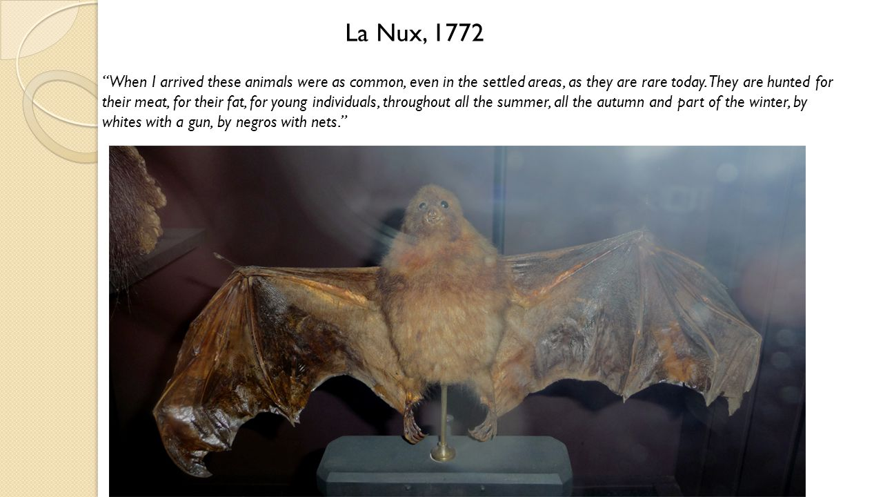 "La Nux, 1772 ""When I arrived these animals were as common, even in the settled areas, as they are rare today. They are hunted for their meat, for thei"