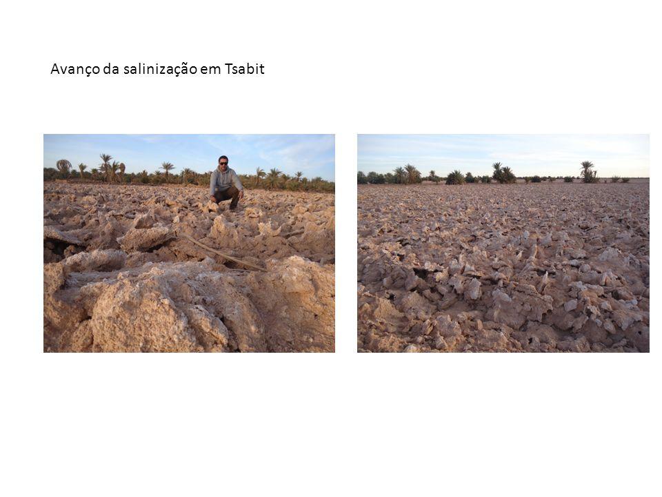 Avanço da salinização em Tsabit