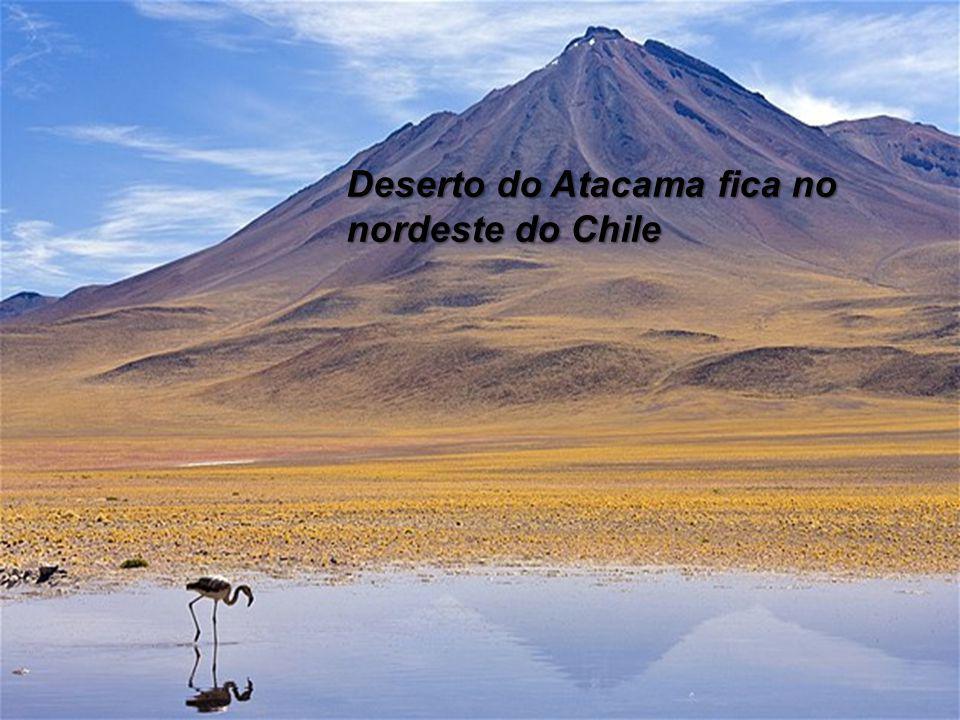 A floresta de várzea está localizada na bacia Amazônica, no Perú