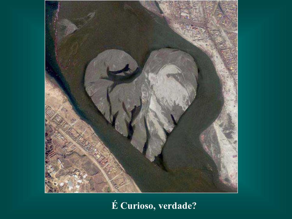 Será casual a grande semelhança entre a foto e um golfinho?