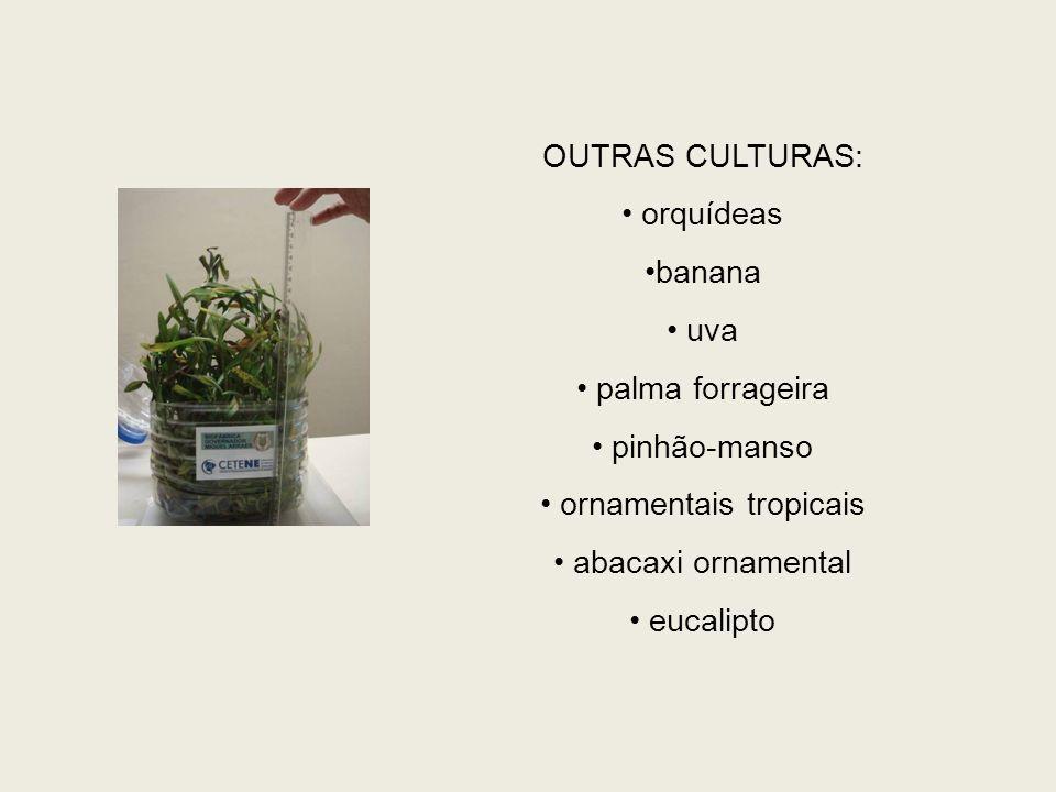 OUTRAS CULTURAS: orquídeas banana uva palma forrageira pinhão-manso ornamentais tropicais abacaxi ornamental eucalipto