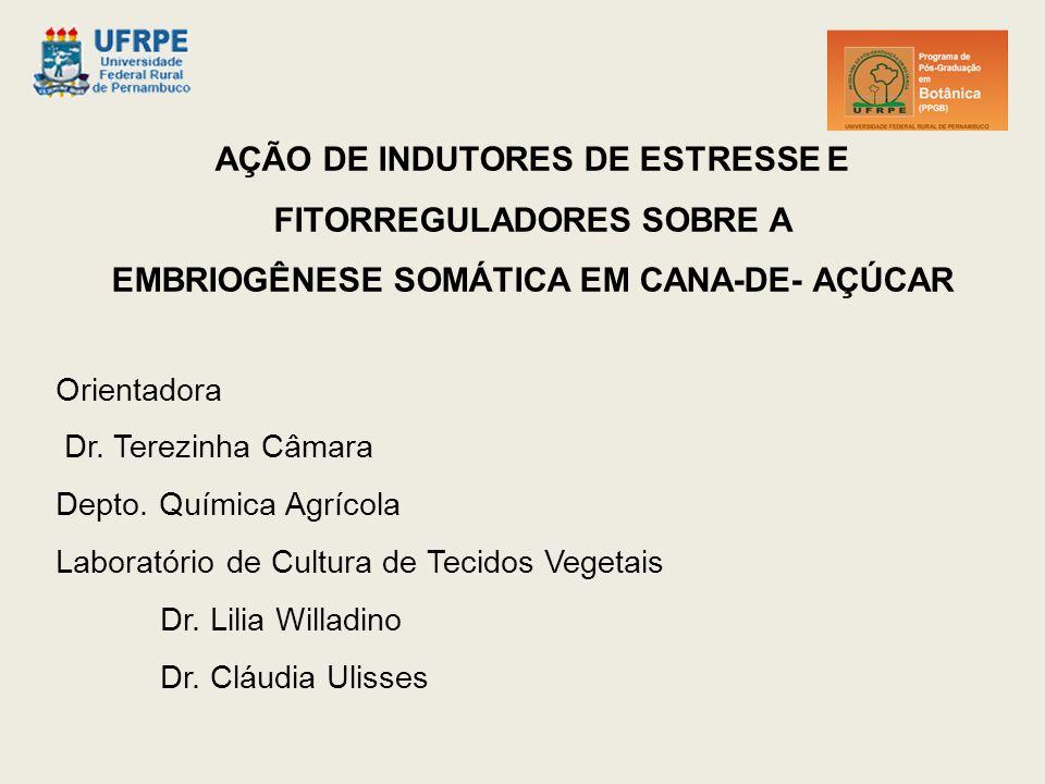 AÇÃO DE INDUTORES DE ESTRESSE E FITORREGULADORES SOBRE A EMBRIOGÊNESE SOMÁTICA EM CANA-DE- AÇÚCAR Orientadora Dr.