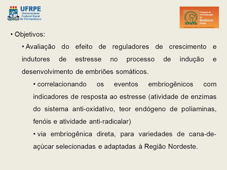 Objetivos: Avaliação do efeito de reguladores de crescimento e indutores de estresse no processo de indução e desenvolvimento de embriões somáticos.