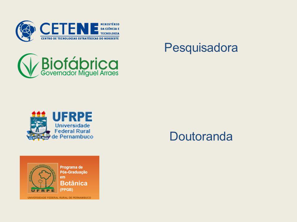 A embriogênese somática (ES)  propagação clonal de plantas férteis e geneticamente sólidas , e regeneração de plantas geneticamente modificadas.